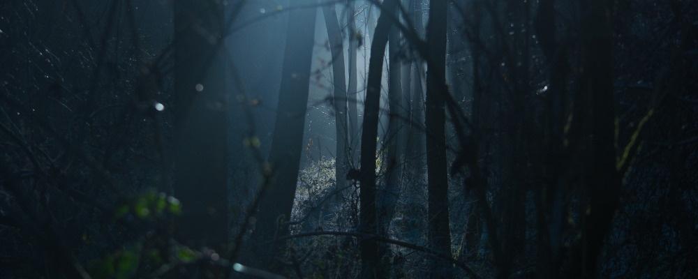 Wald, Nacht, © Pixabay