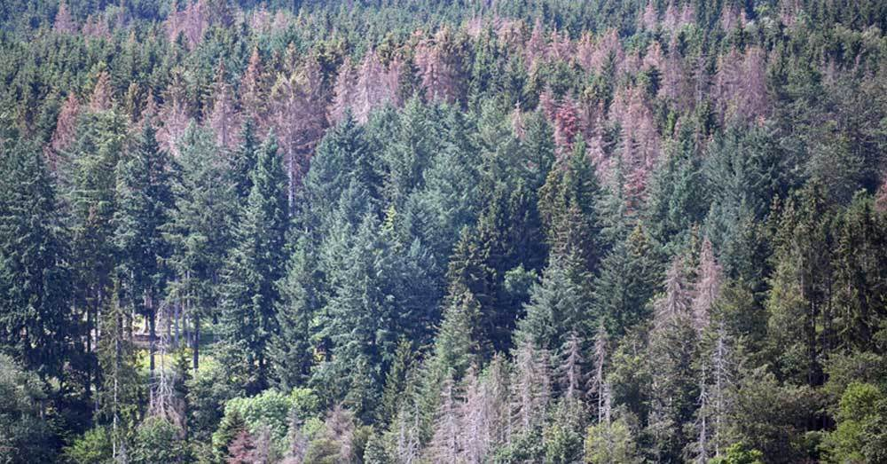 Schwarzwald, Dürre, Trockenheit, Baumsterben, © Patrick Seeger - dpa (Symbolbild)
