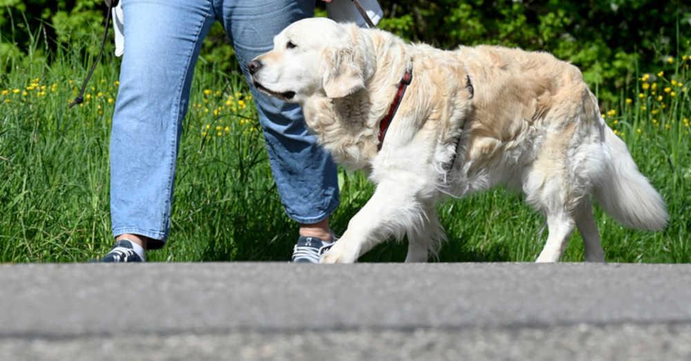Hundeführerschein, Hund, Gassi-Gehen, Haustier, © Bernd Weißbrod - dpa