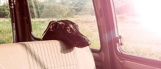 Hund, Auto, hitze, rechtslage, tirschutz, © pixabay