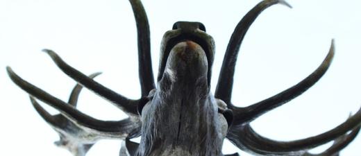 Hirsch, Statue, Figur, Geweih, © Pixabay