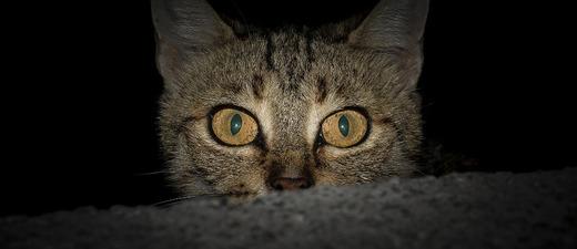 Katze, Kater, Katzenaugen, © Pixabay