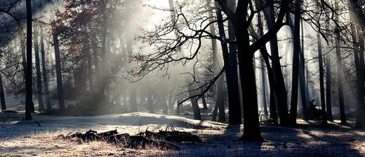 Winter, Wald, Bäume, Natur, © Pixabay