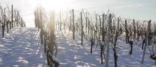 Frost, weinbau, Südbaden, Baden, reben, schnee, Weinberg, Winter, Winzer, © pixabay.de