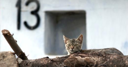 © Mykola Velychko - Fotolia.com