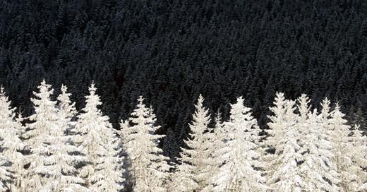 Schwarzwald, Winter, Natur, © Patrick Seeger - dpa