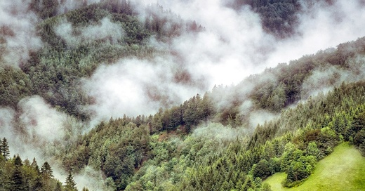 Schwarzwald, Natur, Nebel, © Pixabay