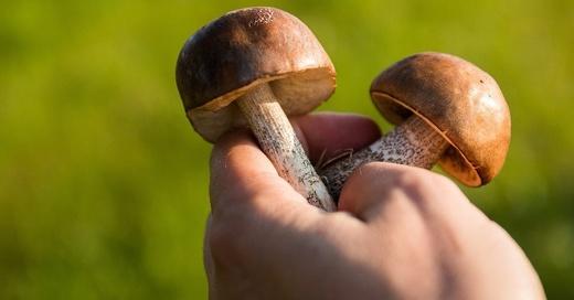 Pilze, Sammeln, © Pixabay