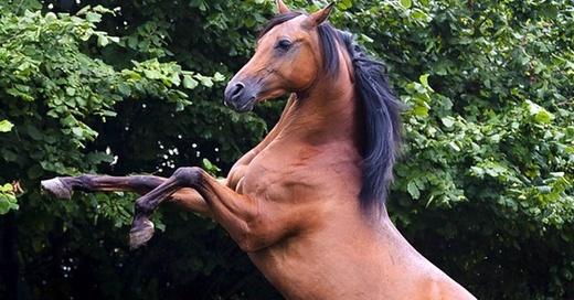 Pferd, Hengst, Hufe, © Pixabay