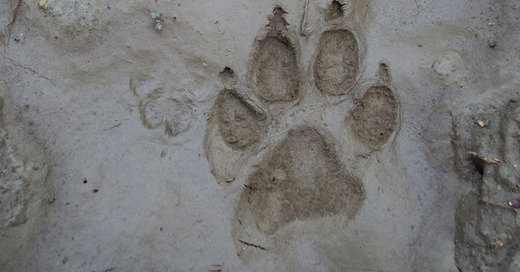 Hund, Pfote, Abdruck, Schlamm, © Pixabay