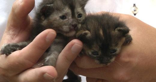 Katzen, Babys, © baden.fm