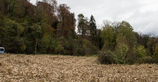 Mord, Endingen, Wald, Joggerin, © Patrick Seeger - dpa