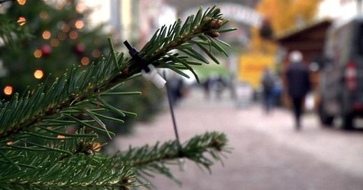 Weihnachtsmarkt, Freiburg, Tanne, Christbaum, © baden.fm