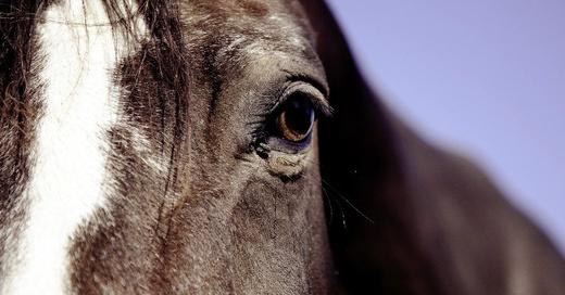 Pferd, Tier, © Pixabay