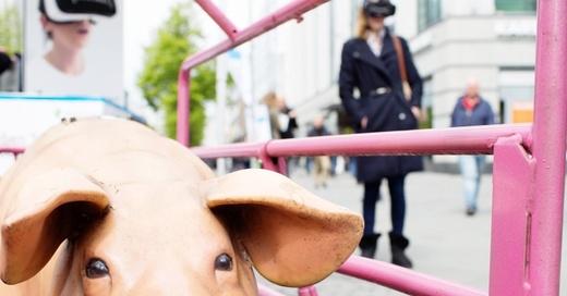 iAnimal, Virtual Reality, Film, © Rieke Petter - Albert Schweitzer Stiftung