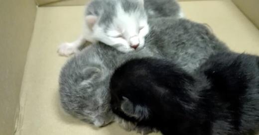 Katzen, Babys, Kätzchen, © Polizeipräsidium Freiburg