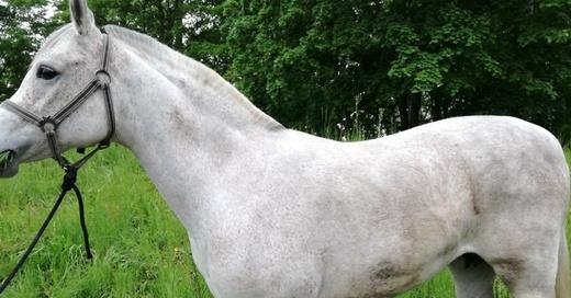 Stute, Pferd, Tier, © Polizeipräsidium Offenburg