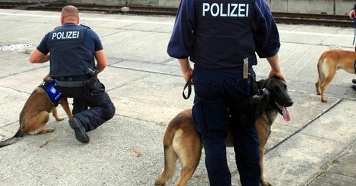 Bundespolizei, Diensthund, Hundestaffel, © Jens Wolf - dpa (Symbolbild)