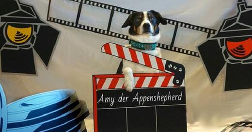 Tier, Hund, Messe, Freiburg, © Aurelia Franke Hornung