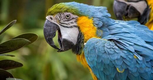 Papagei, Ara, Vogel, © Pixabay (Symbolbild)
