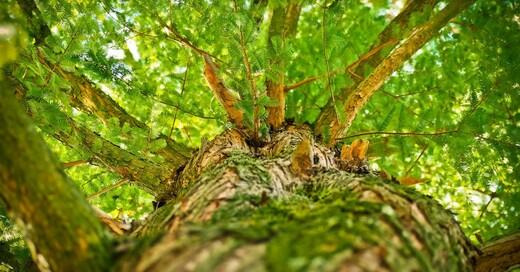 Pflanze, Natur, Wald, Baum, © baden.fm (Symbolbild)
