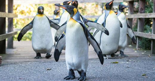 Pinguine, Zoo Basel, Erweiterung, © Zoo Basel