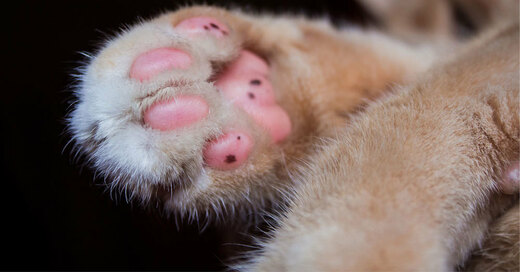 Katze, Pfote, Tier, © Pixabay (Symbolbild)