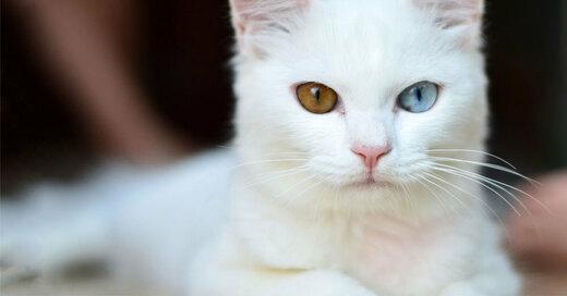 Katze, Fell, © Pixabay (Symbolbild)