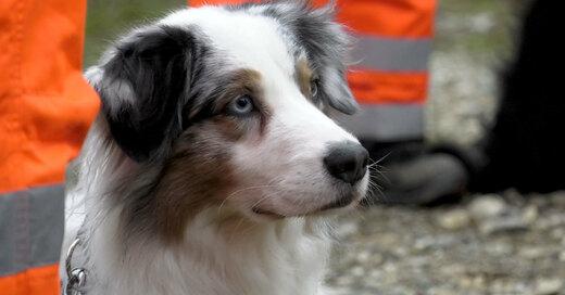 BRH Rettungshundestaffel, Oberrhein, © baden.fm