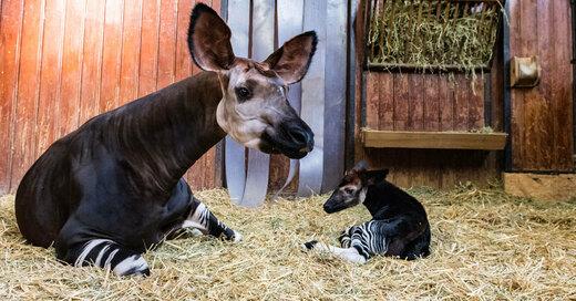 Zoo Basel, Zolli, Nachwuchs, Tiere, © Zoo Basel