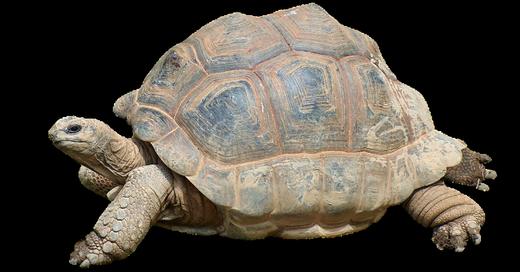 Schildkröte, Neuenburg, Polizei, © © Symbolbild Pixabay