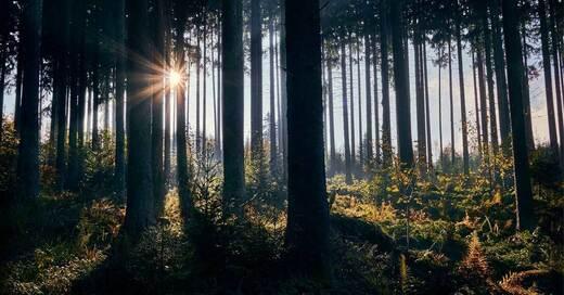 Schwarzwald, Forst, Herbst, Sommer, Sonne, © Pixabay (Symbolbild)