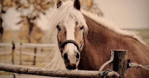Pferd, Pony, © Pixabay (Symbolbild)