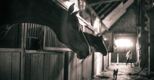 Pferdestall, Pferde, Tiere, Haltung, Ausmisten, © Pixabay (Symbolbild)