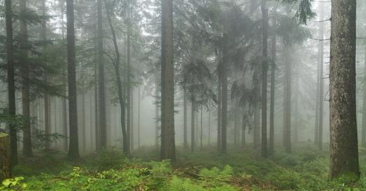 Naturpark, Schwarzwald, Seebach, Nebel, © Patrick Seeger - dpa