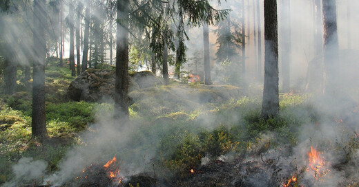 Feuer, Waldbrand, Bäume, © Pixabay (Symbolbild)