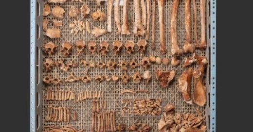 Affenknochen, Affe, Skelett, Knochen, Basel, © © Philippe Saurbeck