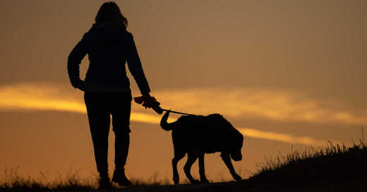 Gassigehen, Hund, Spaziergang, Leine, Haustier, © Sebastian Gollnow - dpa (Symbolbild)