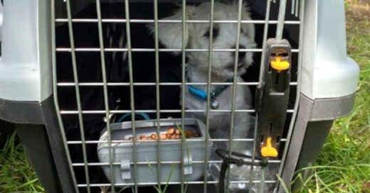 Welpenhandel, Welpe, Hund, Transportbox, © Polizeipräsidium Offenburg