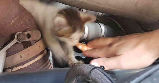 Katzenbaby, Katze, Kätzchen, Motorraum, Auto, Rettung, Tierrettung, © Polizeipräsidium Freiburg