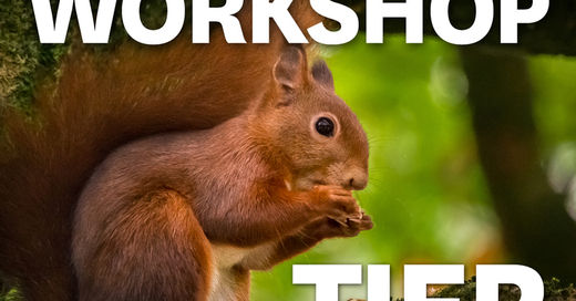 MUNDOLOGIA-Workshop: Tierfotografie, © © Veranstalter