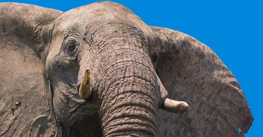 BOTSWANA - Tierparadies - artenreich, faszinierend - Multivision mit Live-Kommentar, © © Veranstalter