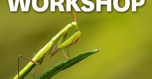 MUNDOLOGIA-Workshop: Makrofotografie, © © Veranstalter