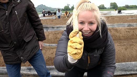 Spargelstechen, Bohrerhof, Held vom Feld, Lisa, © baden.fm
