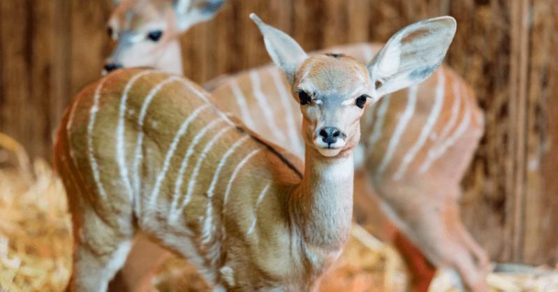 Zoo Basel, Nachwuchs, © Zoo Basel