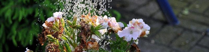 Blumen gießen, Gieskanne, © Pixabay