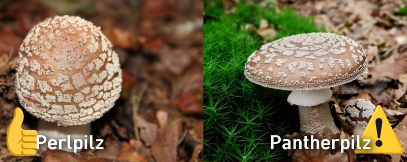 Pilze, Giftpilz, Schwarzwald,, © Pixabay (Symbolbild)