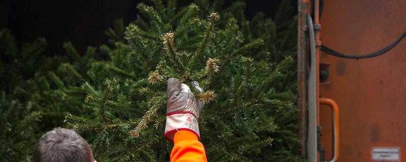 Weihnachtsbaum, Tannenbaum, Müllabfuhr, © dpa