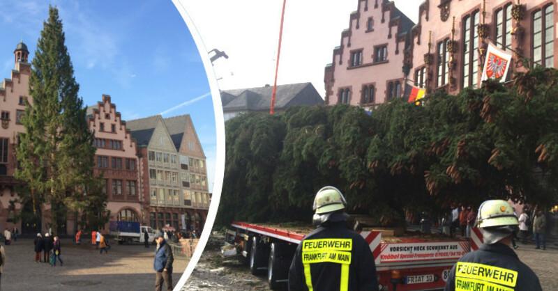 Weihnachtsbaum Frankfurt.Riesiger Schwarzwald Weihnachtsbaum In Frankfurt Angekommen Baden Fm
