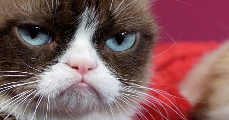 Grumpy Cat, Madmae Tussauds, © Barbara Munker-dpa